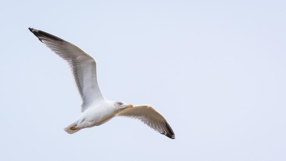 Fågelnytt i Falun!