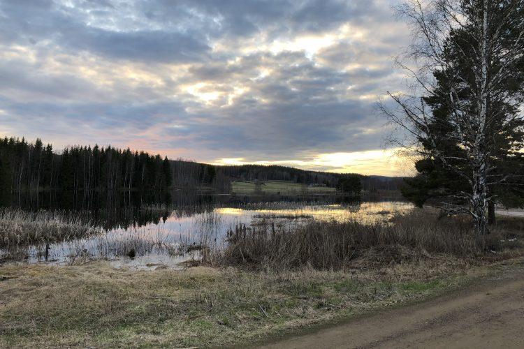 Kvällsexkursion till Backa Danholn 1 maj 2019.