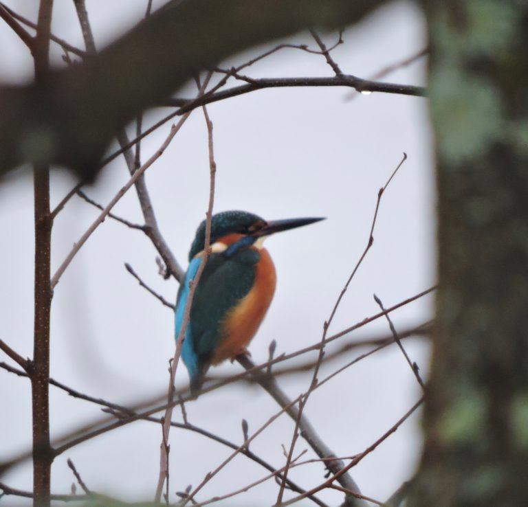 Häftiga fågelobsar under vintern.